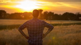 Young man looks out to sunset in a field